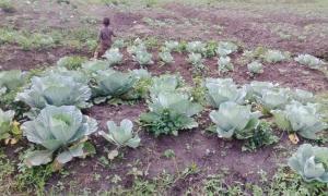 Uganda Kids in Garden